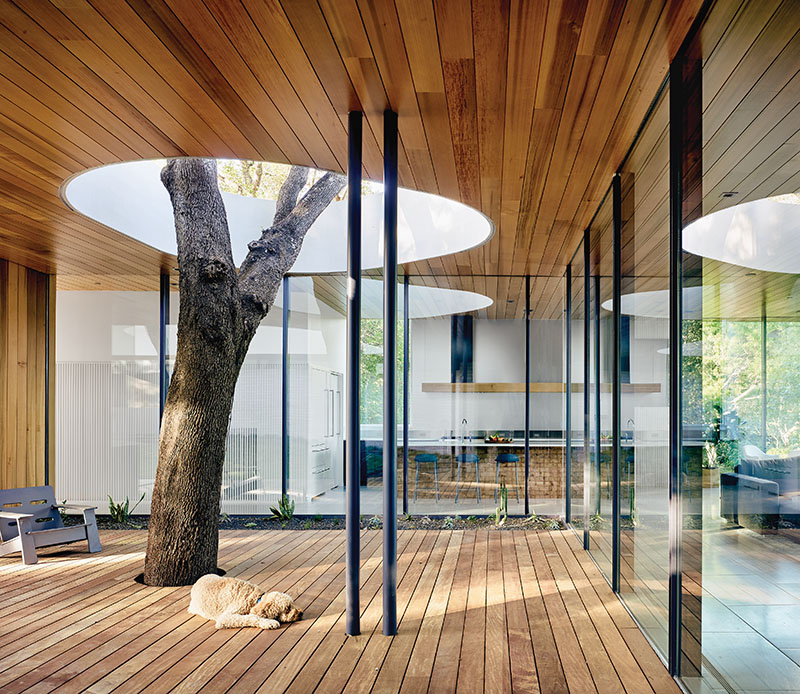 A Home Built Around A Tree Austin Monthly Magazine